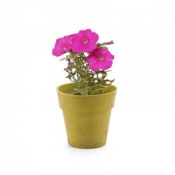 Pot with petunia seeds. Biodegradable.