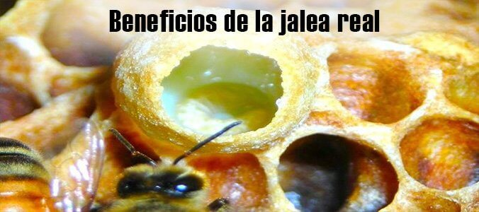 Beneficios de la jalea real