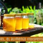 La miel: el alimento indispensable que debe permanecer en nuestra cocina