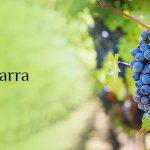 El vino de Pitarra: cultura y gastronomía extremeña